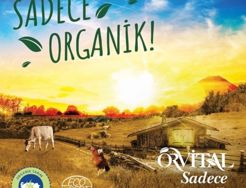Türkiye'de Bir İlk: Özel Kaplumbağa Anaokulu Organik Beslenmeye Geçti…